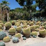 small section of the Desert Garden