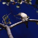 Kingfisher at Lakeside