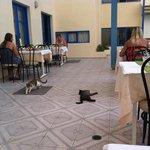 Коты резвяться развлекая на ужине :)