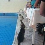 У котов строгое разделение, у каждого свой стол! :))