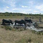 Op safari met de Ranger van Huilltop Camp zagen we Neushoorns, april 2014