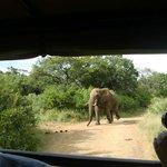 Deze joekel van een olifantenman avhtervolgde onze safariwagen! april 2014
