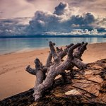 海滩上的枯树