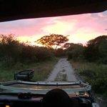"""Parapluboom"" tijdens de ochtendsafari in Tembe Elephant Park, april 2014"