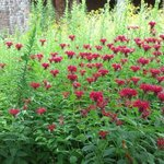 King's Garden at Fort Ticonderoga