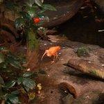 Biodome - ibis