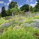 View over the heather garden