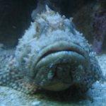 обитатель аквариума