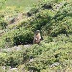 des marmottes a deux pas du chalet