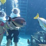 Underwater with the sharks