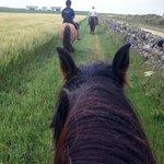 Riding on a barley field