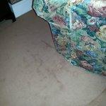 encantador sofá y moqueta