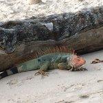 Some amazing iguanas!