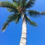 beautiful palms