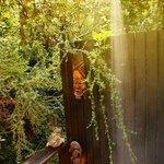 Outdoor Shower Treetops