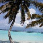 beauty of Kurumba beach