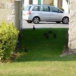Ducks wandering around the grounds.