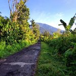Walk up Mt Batukaru