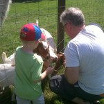 feeding the baby goats