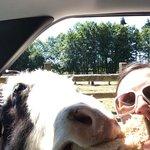 yak selfie