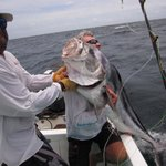 80+lb rooster fish