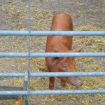 Animals on the Trevayne farm