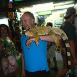 Iguana for hire