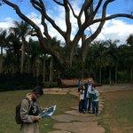 Nós tentando decidir o que visitar primeiro... Ao fundo palmeiras e a imponência dessa árvore im