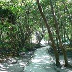 Beautiful, shaded path through ruins