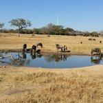 Nkorho watering hole