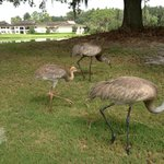 Wildlife on the golf course