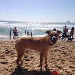 best dog beach this pup has found on either coast!