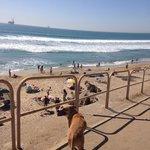 walkway down to the dog beach