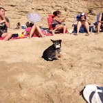 cliffs that back the beach and safely enclose loose dogs