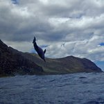 Jumping dolphin!