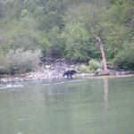 The area where we sit and wait (small cove)...the bear is AT the brook/ boats are all around us