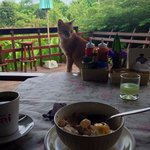 Lion and the amazing breakfast