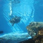 Sea turtle tank