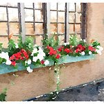 Charming flower boxes everywhere
