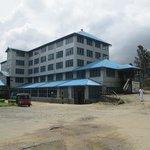 Tea Factory- Blue field