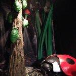 Creepy Crawlie Exhibition