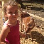 beautiful little deer