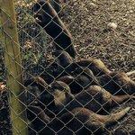 The otter family waiting for breakfast