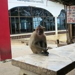 One of the more low-key monkeys at the temple