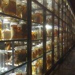 Big fish archive