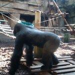 parck des grands singes