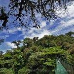 Un tour sympa avec Forest Alive : la recherche des Bellbirds à la Selvatura