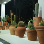 Коллекция кактусов впечатлила