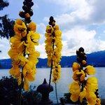 Blumenpracht Isola Madre