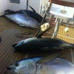 Unos atunes recién pescados por nuestros clientes